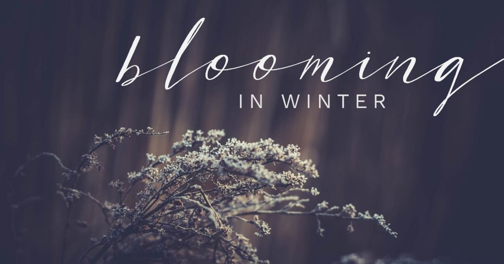Blooming-in-Winter
